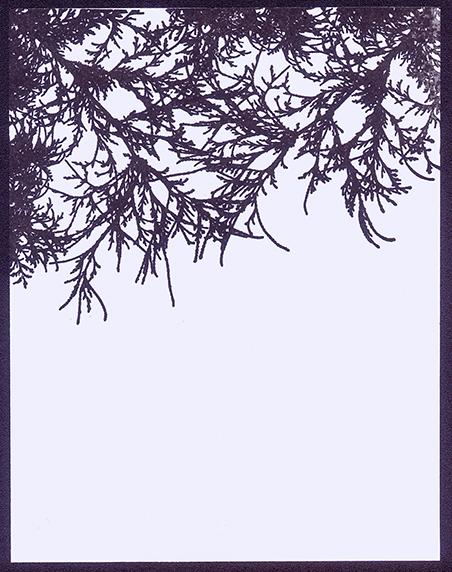 Branch Border
