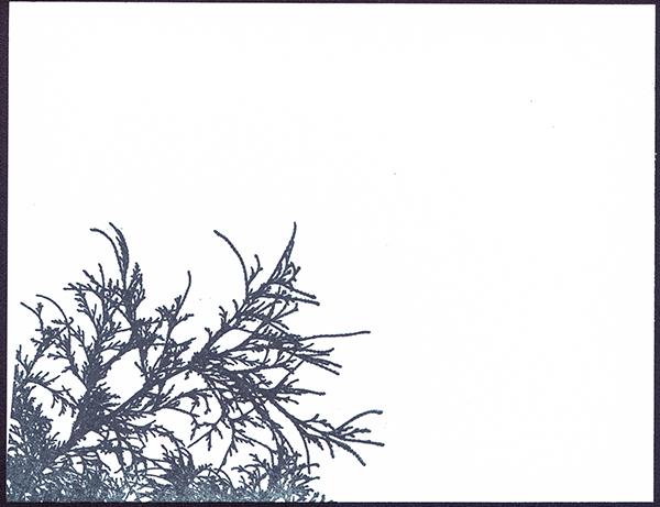 Corner Branch